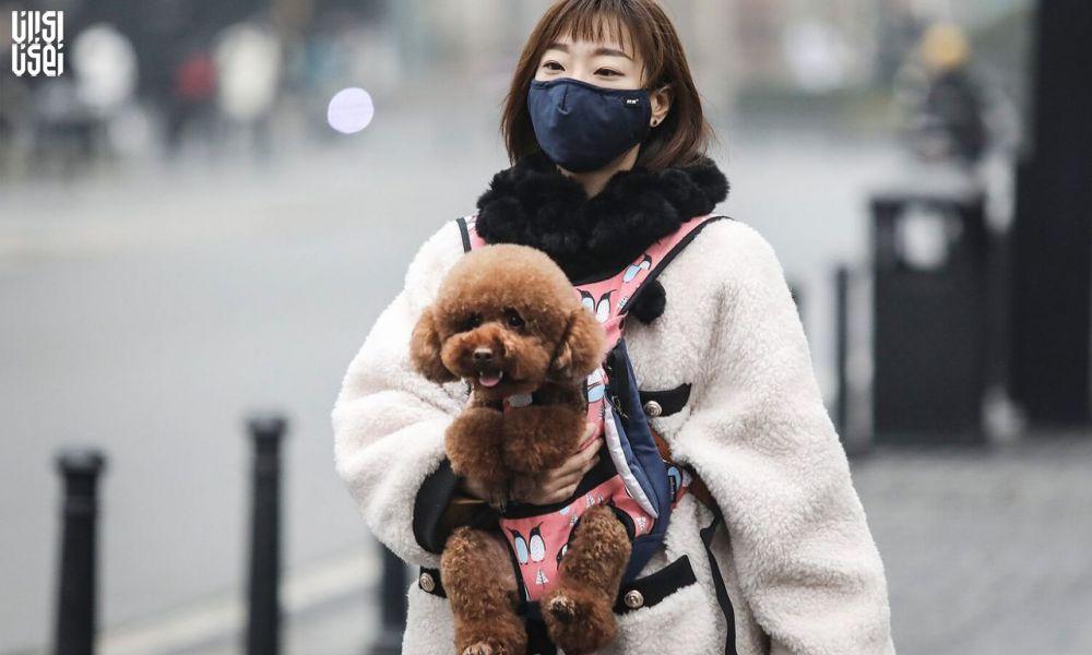ابتلای دومین سگ در هنگ کنگ به ویروس مرگبار کرونا