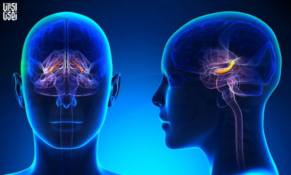 کشف نقطه ای از مغز که کلید خاموش کردن درد است!
