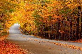 تقویت سیستم ایمنی بدن در پاییز