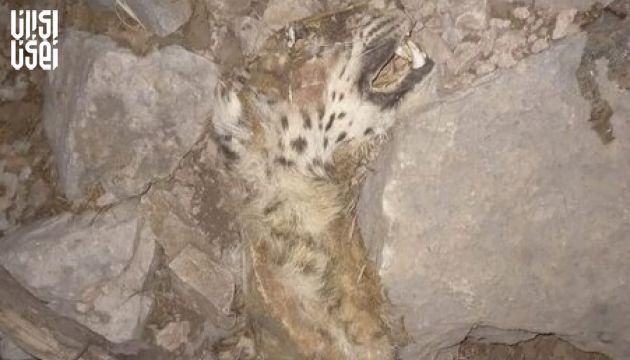 مرگ پلنگ ایران در آتش سوزی جنگل های بلوط
