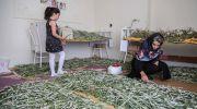 دهمین دور انتخاب زنان کارآفرین برتر با آرای مردمی آغاز شد