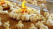 درخواست استمرار  تثبیت بازار جوجه یک روزه از وزیر جهاد کشاورزی