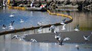 نشت نفت در سواحل کالیفرنیا، فاجعه ای زیست محیطی